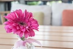 Pink flower in glass vase Stock Photography