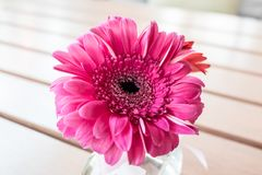 Pink flower in glass vase Stock Photo