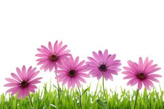 Pink flower in grass Stock Photography