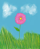 Pink flower in the grass. A beautiful pink flower stands alone in the grass under the dreamy clouds Stock Photography