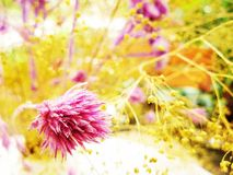 Pink flower among grass and rice. Pink flower in a vase Royalty Free Stock Photos
