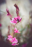 The pink flower. In Greece royalty free stock images