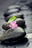 Pink flower and green leaf on spa stone on wet black surface, cl Royalty Free Stock Photography