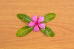 Pink flower with green leaf Stock Image