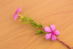 Pink flower with green leaf Stock Images