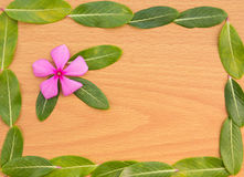 Pink flower with green leaf Stock Photos