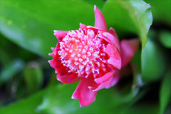 Pink flower with green leaves Stock Photos