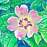 pink flower on green leaves background stock illustration