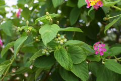 Pink flower and green leaves plants stock images