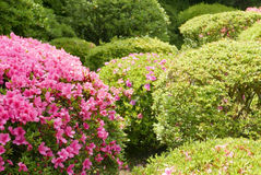 Pink flower, green plant and tree in Japan public park. Pink flower, green plant and tree in the Japan public park Stock Image