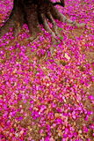 Pink flower on ground Stock Photos