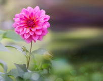 Pink flower growing in green plant. royalty free stock photos