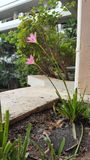 Pink flower. Head plant pink flower Stock Photo