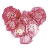 Pink flower heart. A heart out of pinkt flowerbuds on a white background Stock Photos