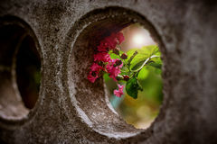 Pink flower in hole Stock Images
