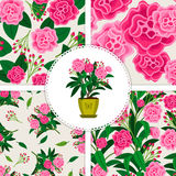 Pink flower icon and patterns set. Pink flower in pot and four floral patterns set. Vector illustration Royalty Free Stock Image