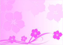 Pink flower illustration  Stock Images