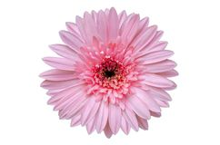 Pink flower Isolate White background