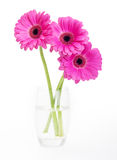 Pink flower isolated Royalty Free Stock Photo