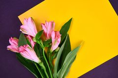 a pink flower lays on yelow paper in white background. Flat lay style. Space for text royalty free stock photography