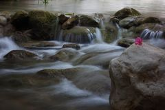 Pink flower lies on a stone next to the current river Royalty Free Stock Photos