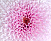 Pink Flower Macro Background Stock Image
