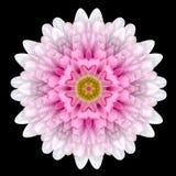 Pink Flower Mandala Kaleidoscope Isolated on Black Royalty Free Stock Photography