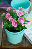 Pink flower in minty flower pot on wooden table. Spring pink flower in teal flower pot on rustic wooden table Stock Images