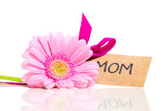 Pink flower for mom isolated on white with a tag. Pink gerbera daisy isolated on white with a text message Mom stock image