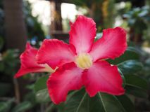 Pink flower. My first pic Royalty Free Stock Photo