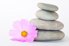 Pink flower near a stack of pebbles Royalty Free Stock Photography