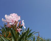 Pink flower opposite a blue sky Stock Photo