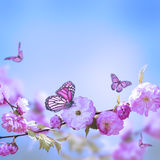 Pink flower of an Oriental cherry Stock Image