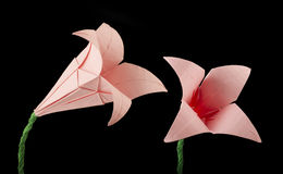 Pink Flower origami black isolated Stock Photos