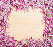 Pink flower petal frame with blank space Royalty Free Stock Photography