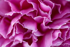 Pink flower petals Royalty Free Stock Photography