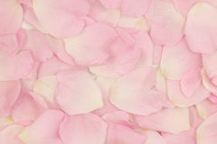 Pink flower petals background Royalty Free Stock Photography