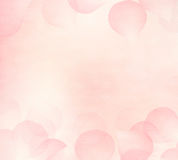 Pink flower petals background. Royalty Free Stock Photography