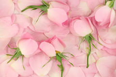 Pink flower petals and buds  background Royalty Free Stock Images