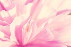 Pink flower petals macro Stock Image