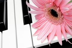 Pink flower on a piano keyboard. Closeup of a pink flower on a piano keyboard stock photos