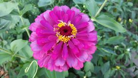 Pink flower. Picture of pink yellow flower stock images