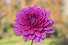 A pink flower stock photos