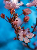 Pink flower. On a blue sky background royalty free stock image