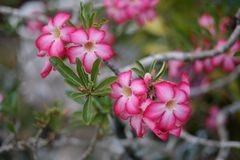 Pink Flower. Plants royalty free stock photo