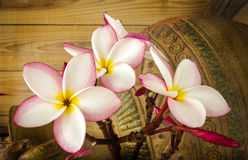 Pink flower plumeria bunch with old baked clay vase and timber w Stock Images