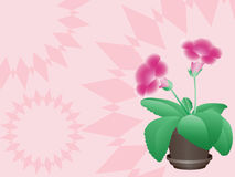 Pink flower in a pot Royalty Free Stock Images