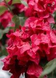 Pink flower in garden stock image