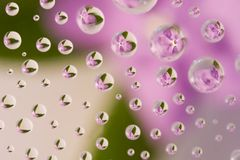 Pink flower reflected in waterdrops Royalty Free Stock Images