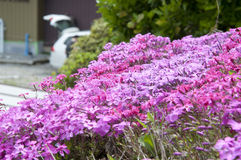 Pink flower Stock Photo